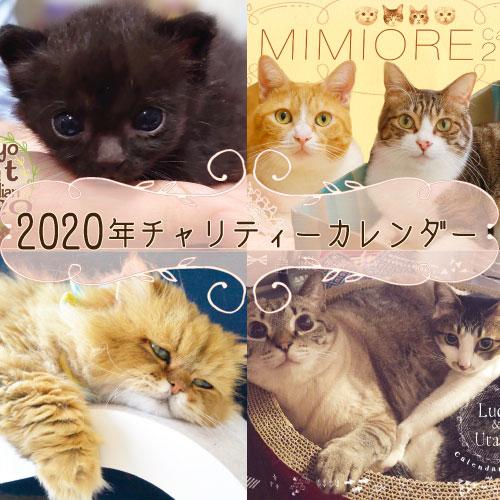 可愛い猫たちがいっぱい!2020年チャリティーカレンダー