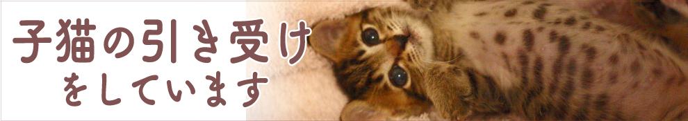 """""""子猫の受け入れを行なっています"""""""