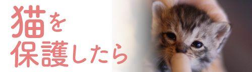 猫を保護したら~保温、ミルク、排泄などケアの方法