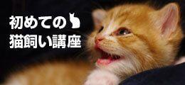 初めての猫飼い講座