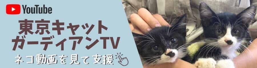 猫動画を見て毎日支援!ShippoTV