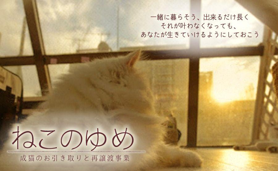 ねこのゆめ〜成猫のお取り引きと再譲渡事業〜
