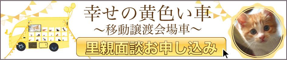 幸せの黄色い車〜移動譲渡会場車〜里親お申し込み