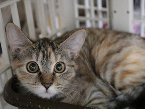 新着猫 写真'