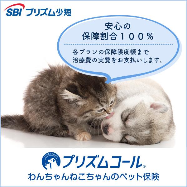 ペット保険はプリズムコール
